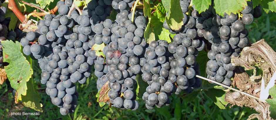 appellation vins de bordeaux